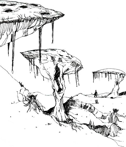 Champignons parassoles empereurs
