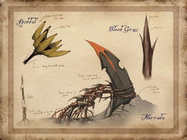 Végétation des Terres mortes : Spiddal, Herbe de sang et Harrada