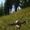 vegetation2
