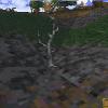 Arbuste sec