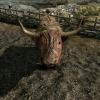 La vache de Blancherive