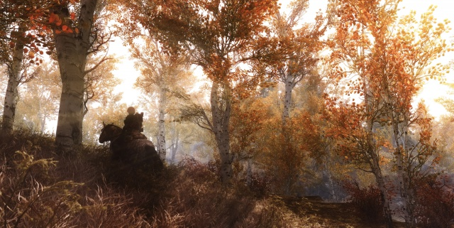 Wandering In Riften Forest