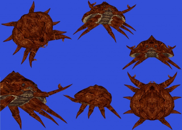 Crabe de vase de Pertevue